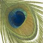Guardanapo Peacock Feather, 33x33 cm - Paper Design
